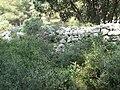 Rempart de l'oppidum de Castillon (25 avril 2010).jpg
