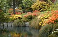 Rhododendron border and the Avon River, Mona Vale.jpg