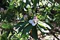 Rhododendronpark Bremen 20090513 126.JPG