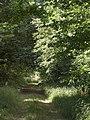 Ride in Furze Croft - geograph.org.uk - 2000526.jpg