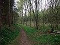 Robin Hood Way through Elkesley Wood - geograph.org.uk - 1252178.jpg