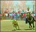 Rodeo 3d-Anaglyph Photo-3D (35614169466).jpg