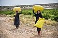 Rose field working women Kashan city1.jpg