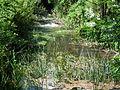 Ruisseau des Epeaux (2).JPG