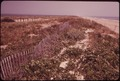 SNOW FENCES AND BRUSH PILES ARE USED TO BUILD UP THE DUNES - NARA - 547620.tif