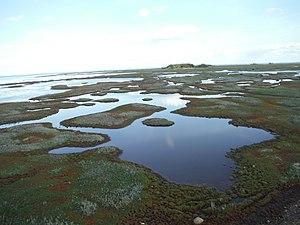 Saltholm - Saltholm Ponds