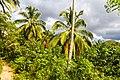 Samaná Province, Dominican Republic - panoramio (87).jpg