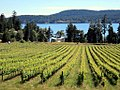 Saturna Vineyards (7604529538).jpg