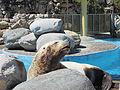 Sea Lion FR.JPG