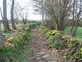 Sentier (17).jpg