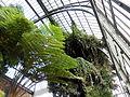 Serre-fougeres-Plantes-Paris 11.JPG