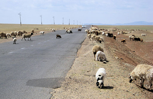 Sheep crossing (2540222647)