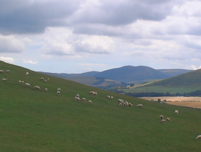 Sheep grazing on slopes of Camp Hill - geograph.org.uk - 909051