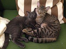 Shubunkin and Zuzu the cats.jpg