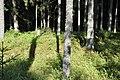 Skangaļu vācu karavīru brāļu kapi (WWI), Valgundes pagasts, Jelgavas novads, Latvia - panoramio (5).jpg
