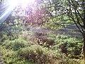 Slatiny - panoramio (6).jpg