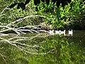 Smeaton Lake, near the Prestonkirk - geograph.org.uk - 920594.jpg