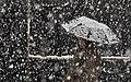 Snowy day of Rasht - 26 November 2011 19.jpg
