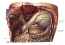 funcion de las glandulas de bartolino
