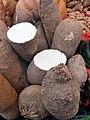 Solanales - Ipomoea batatas - 2.jpg