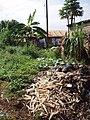 Solid waste heap in Kamokya, Kampala (4331538625).jpg