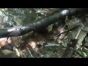 File:Sophisticated-Communication-in-the-Brazilian-Torrent-Frog-Hylodes-japi-pone.0145444.s003.ogv