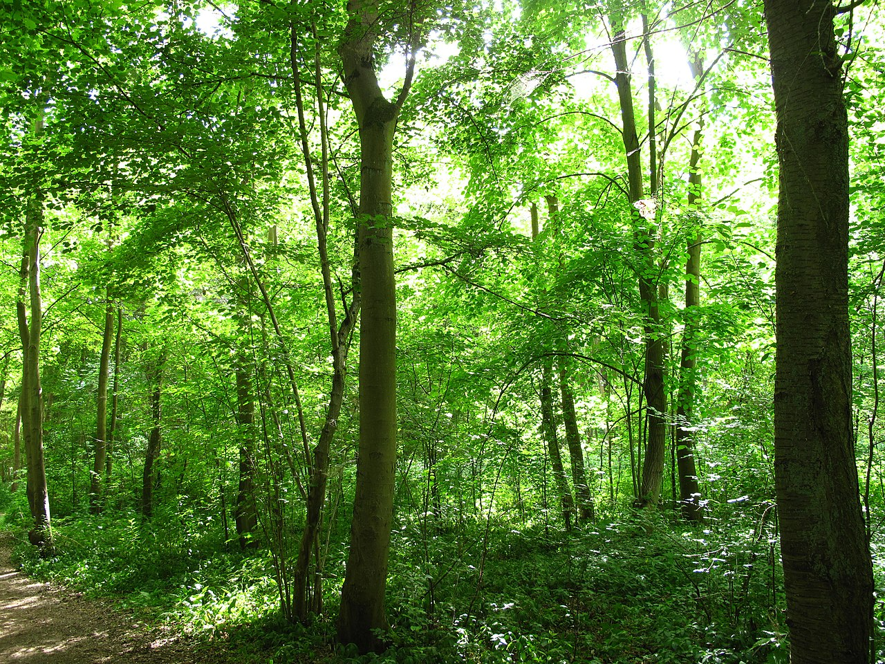 File Sous Bois Vaires Jpg Wikimedia Commons