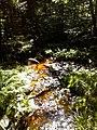 South Branch Bowman Creek.jpg