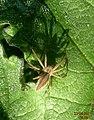 Spider (5657822289).jpg