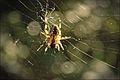 Spider in a web.jpg