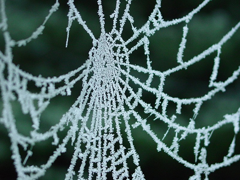 Spiderweb with frost