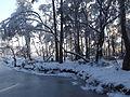 Stappersven in sneeuw 05.JPG