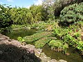 Starr-110307-2057-Cyperus papyrus-habitat view koi pond-Kula Botanical Garden-Maui (24450645903).jpg