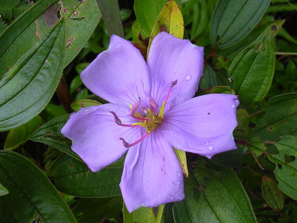 Flower Aesthetic