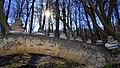 Stenkunst i Fløjstrup Skov.jpg