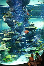 Strait of Malacca and Andaman Sea, S.E.A. Aquarium, Marine Life Park, Resorts World Sentosa, Singapore - 20130105-10.JPG
