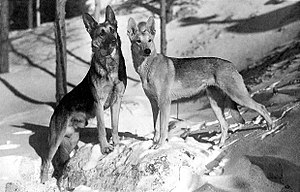 Strongheart - Strongheart and Lady Jule (1924)