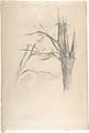 Studies of a tree (recto and verso) MET DP809516.jpg