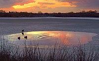 Sunset over Bedfords Park pond - geograph.org.uk - 1110486.jpg
