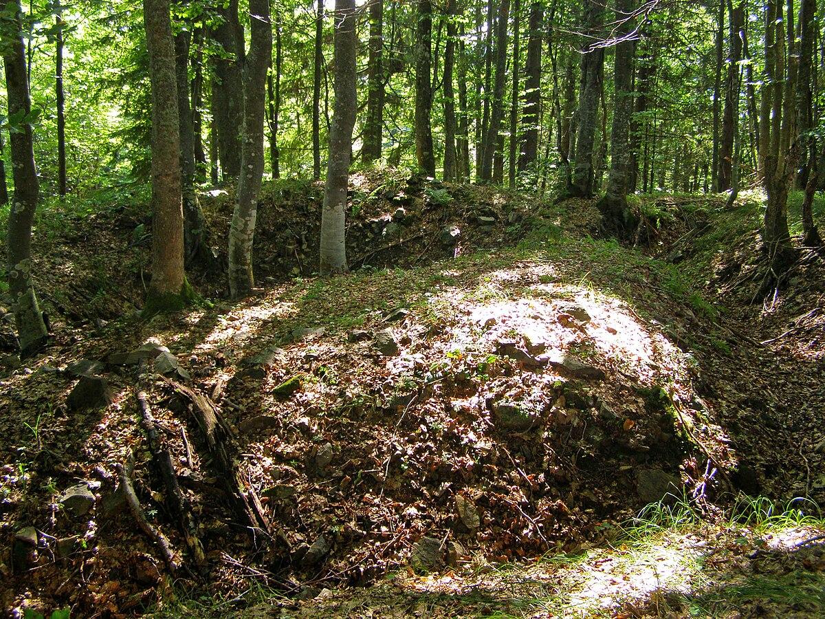 カルパティア山脈とヨーロッパ各地の古代及び原生ブナ林の画像 p1_4