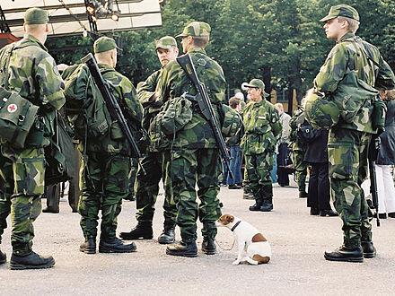 escort gävleborg escort norrbotten