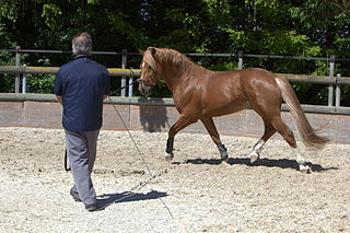 Horse training Methods of teaching behaviors to horses