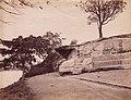 Sydney Botanic Garden (26739416781).jpg
