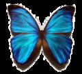 Miniatuurafbeelding voor de versie van 25 aug 2005 om 06:47