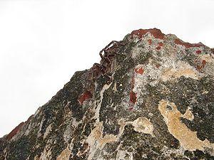 Tarantula at the El Morro ruins in Old San Juan Puerto Rico