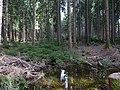 Taunus Forest with stream.jpg