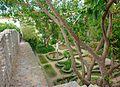 Tavira (Portugal) (12219628096).jpg
