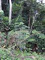 Tayap-Végétation (7).jpg