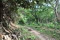 Tayrona Walk - From Calabazo to Pueblito (4626278208).jpg
