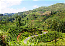 Scenery seen from hill-country Badulla-Colombo railway line
